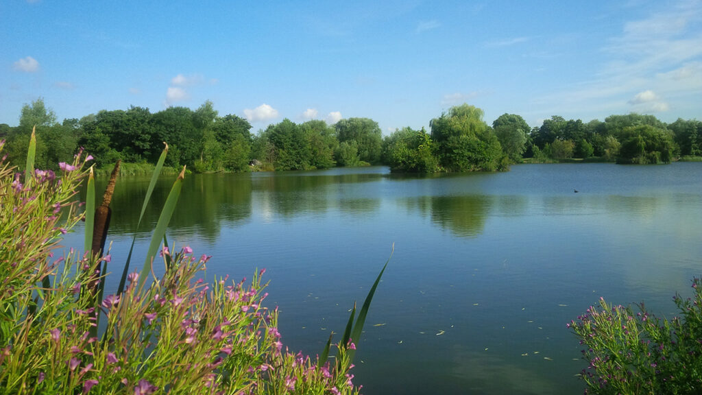Rib Valley Fishing Lakes near Ware, Hertfordshire
